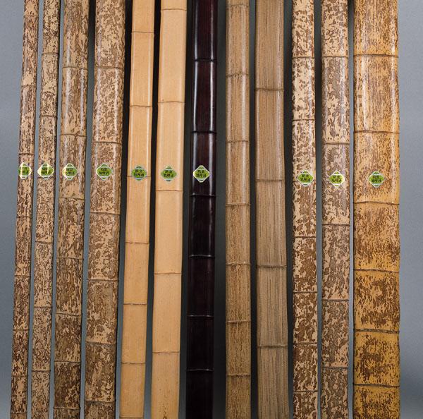 竹の画像 p1_1